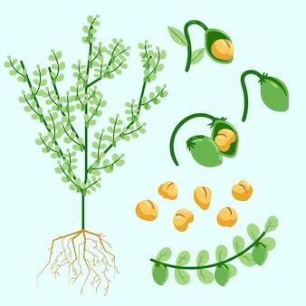 Handgetekende kikkererwten bonen en plant illustratie