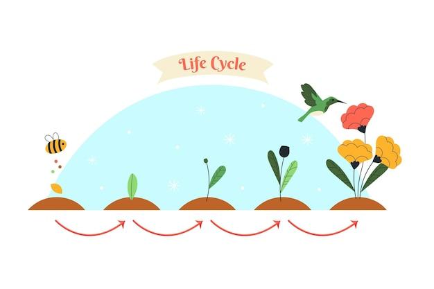 Handgetekende levenscyclus van bloemen