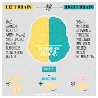 Handgetekende menselijke hersenen infographic