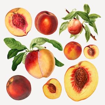 Handgetekende natuurlijke verse perziken