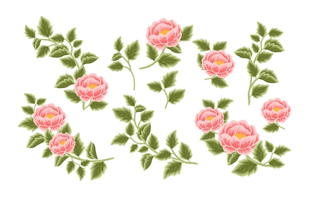 Handgetekende pioenroos bloemstuk en boeket element collectie