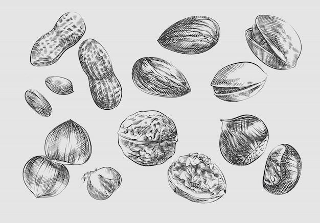 Handgetekende schets set noten. set bevat geschilde pinda's, amandelen, hazelnoten, walnoten, open walnoten in schelpen, pinda's in schelpen, pistachenoten, geschilde hazelnoten