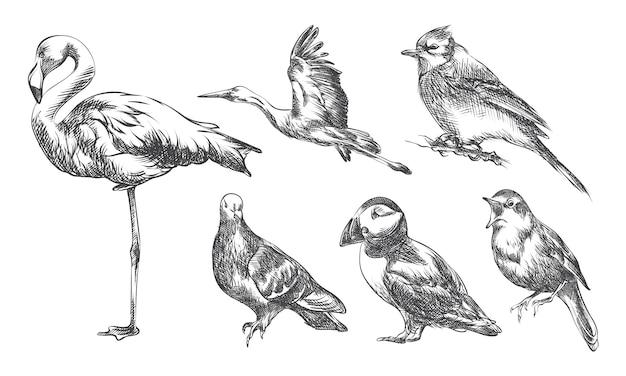 Handgetekende schets set vogels. set bevat ooievaar, flamingo, mus, nachtegaal, adelaar, toekan