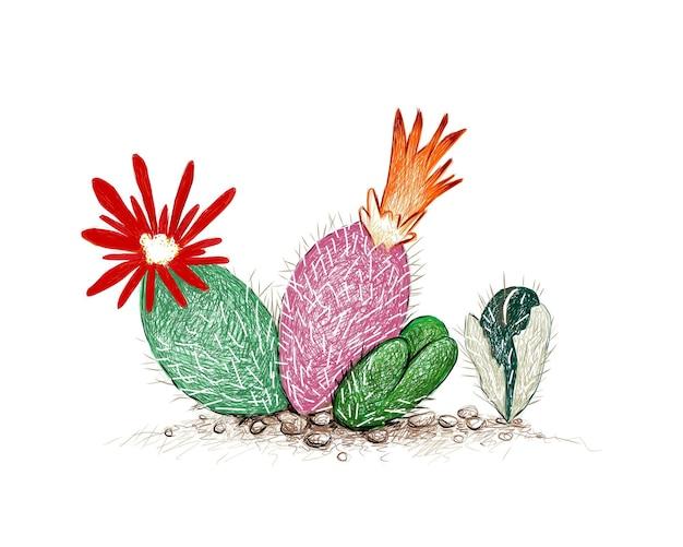 Handgetekende schets van conophytum stephanii plant