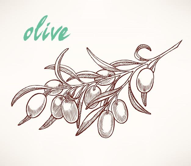 Handgetekende schets van de tak van de olijfboom