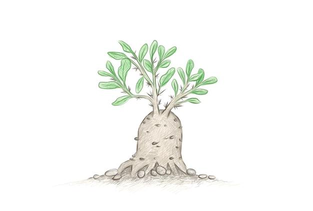 Handgetekende schets van fockea edulis vetplant