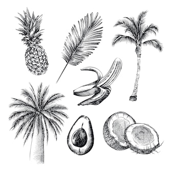 Handgetekende schets van het tropische thema. de set bevat ananas, palmboom, kokos, avocado, banaan, kokospalm