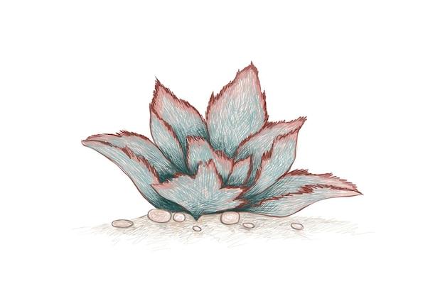 Handgetekende schets van kalanchoe beharensis vetplant