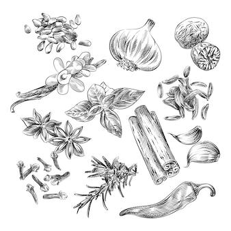 Handgetekende schets van kruiden, specerijen en zaden. de set bestaat uit zonnebloempitten, knoflook, kaneel, badian, peper, anjer, basilicum