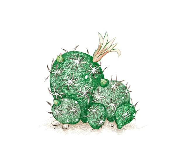 Handgetekende schets van mammillaria gracilis fragilis cactus