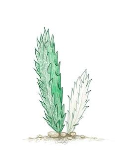 Handgetekende schets van stapelia gigantea cactus