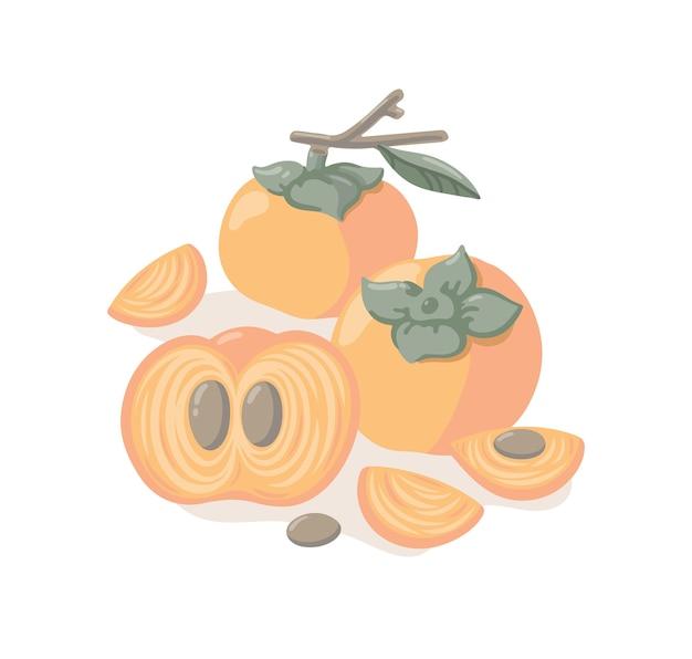 Handgetekende vectorillustratie met kaki. kleurrijk exotisch fruit met takken, bladeren, plakjes op witte achtergrond.
