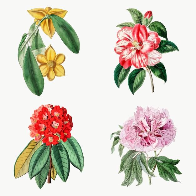 Handgetekende verlaagt vector vintage botanische set