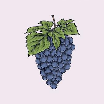 Handgetekende vintage druif