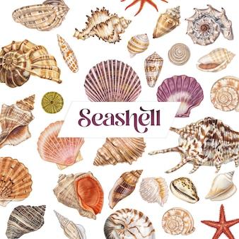 Handgetekende zeeschelpenset