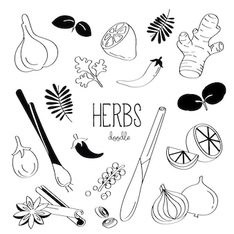 Handtekening stijlen verschillende kruiden. kruiden doodle.