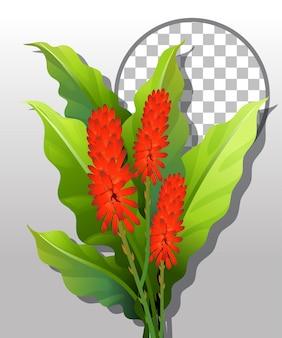 Hanenkam bloem met rond frame