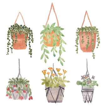 Hangende plant met pot aquarel illustratie set