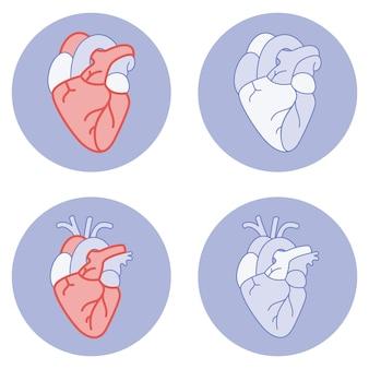 Hartillustratie anatomie echt en symbolisch pictogram voor fitness-app of website of ptint-illustraties