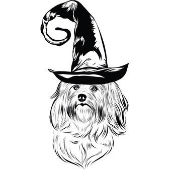 Havanezer hond met heksenhoed voor halloween