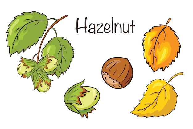 Hazelnoot en bladeren instellen. collectie van handgetekende hazelnootvruchten en bladeren. herfst decoratieve elementen. vectorillustratie voor logo, menu, prenten, stickers, ontwerp en decoratie. premium vector