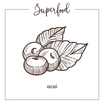 Heerlijke gezonde ecotische acai zwart-wit superfood sepia schets
