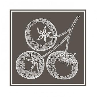 Heerlijke tomaat in tekening geïsoleerd pictogram
