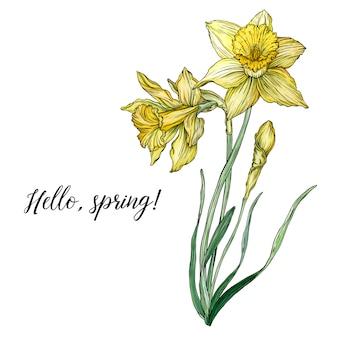 Heldere bloemige lentesamenstellingen met narcissus-bloemen.