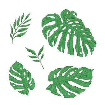 Heldere set van groene tropische bladeren