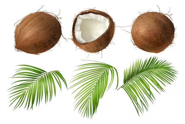 Hele en gebroken kokosnoot met groene palmbladeren