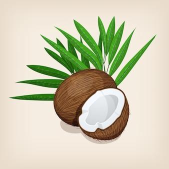 Hele en halve kokos met bladeren. illustratie.