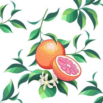 Hele grapefruit met plakjes handgetekend ontwerp