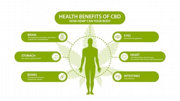 Hennep cbd-voordelen voor uw lichaam, met infographic en silhouet van het menselijk lichaam. gezondheidsvoordelen van cannabidiol cbd uit cannabis, hennep, marihuana, effect op het lichaam