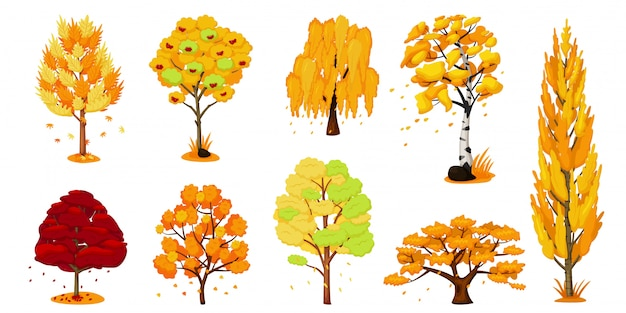 Herfst bomen set. eik, berk, esdoorn