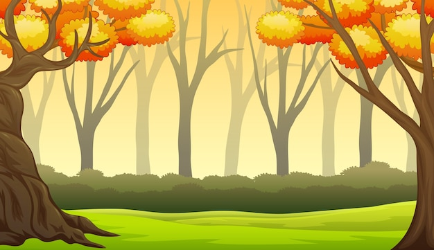 Herfst boslandschap met kale bomen