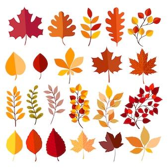 Herfst elementen collectie