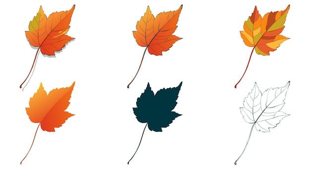 Herfst esdoorn leafe geïsoleerd op witte achtergrond