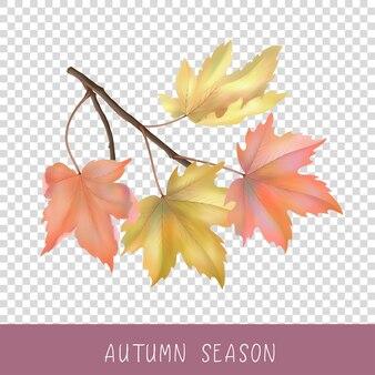 Herfst esdoorn tak met bladeren op transparante achtergrond vector illustraties