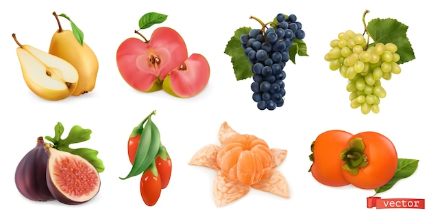 Herfst fruit en bessen illustratie set