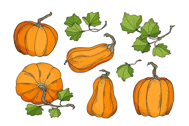 Herfst pompoenen instellen. sinaasappelpompoenen met bladeren