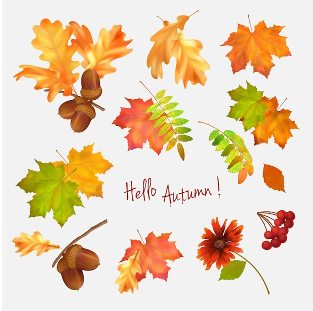 Herfst vector collectie van herfstbladeren op witte achtergrond