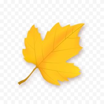 Herfstblad geïsoleerd op een witte achtergrond vector geel blad