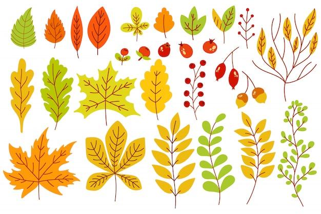 Herfstbladeren en bessen.