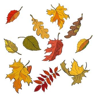 Herfstbladeren van bomen seizoensgebonden gevallen kroon set