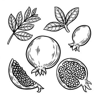 Het fruit vastgestelde hand getrokken illustratie van de granaatappel