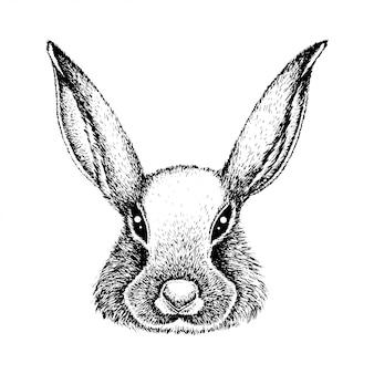 Het gezicht van het konijn.