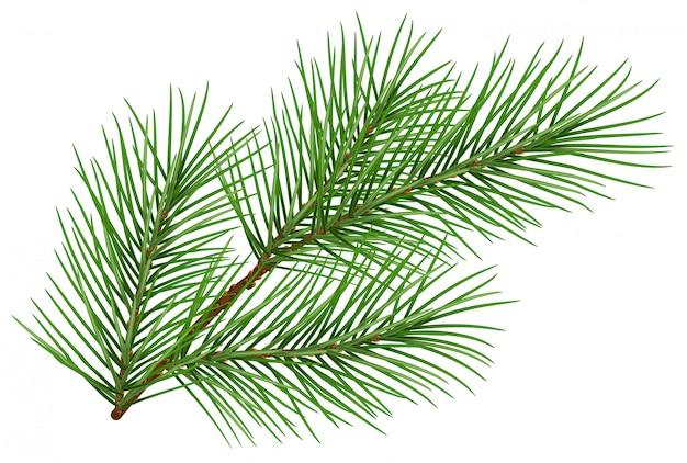 Het groene pluizige symbool van de pijnboomtak van nieuw jaar