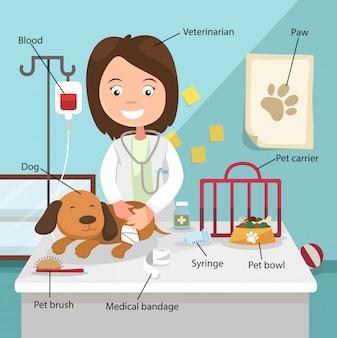 Het idee van de vrouwelijke dierenarts om de hond te genezen