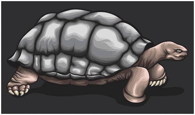 Het karakter van het schildpadbruine concept