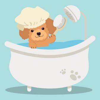 Het karakter van schattige poedel in de buis met platte vectorstijlillustratie over hondenverzorging voor